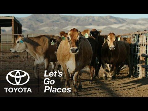 Toyota Mirai chạy bằng... phân bò
