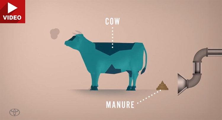 Toyota lại tiếp tục phân tích về năng lượng phân bò
